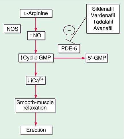 viagra mechanism of action