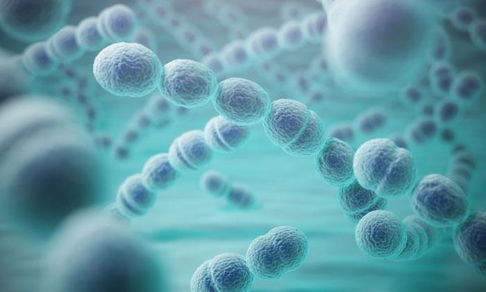 zithromax kills bacteria